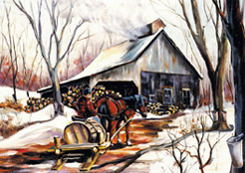 Horse pulling sap wagon to the sugarhouse